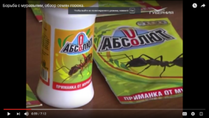 Борьба с муравьями, обзор семян гороха.