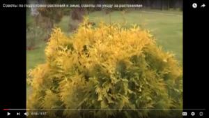 Советы по подготовке растений к зиме, советы по уходу за растениями