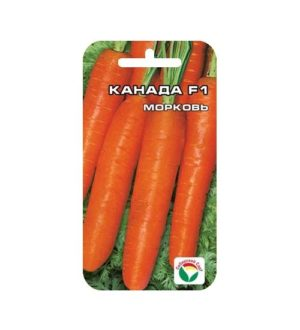 МорковьКанада F1